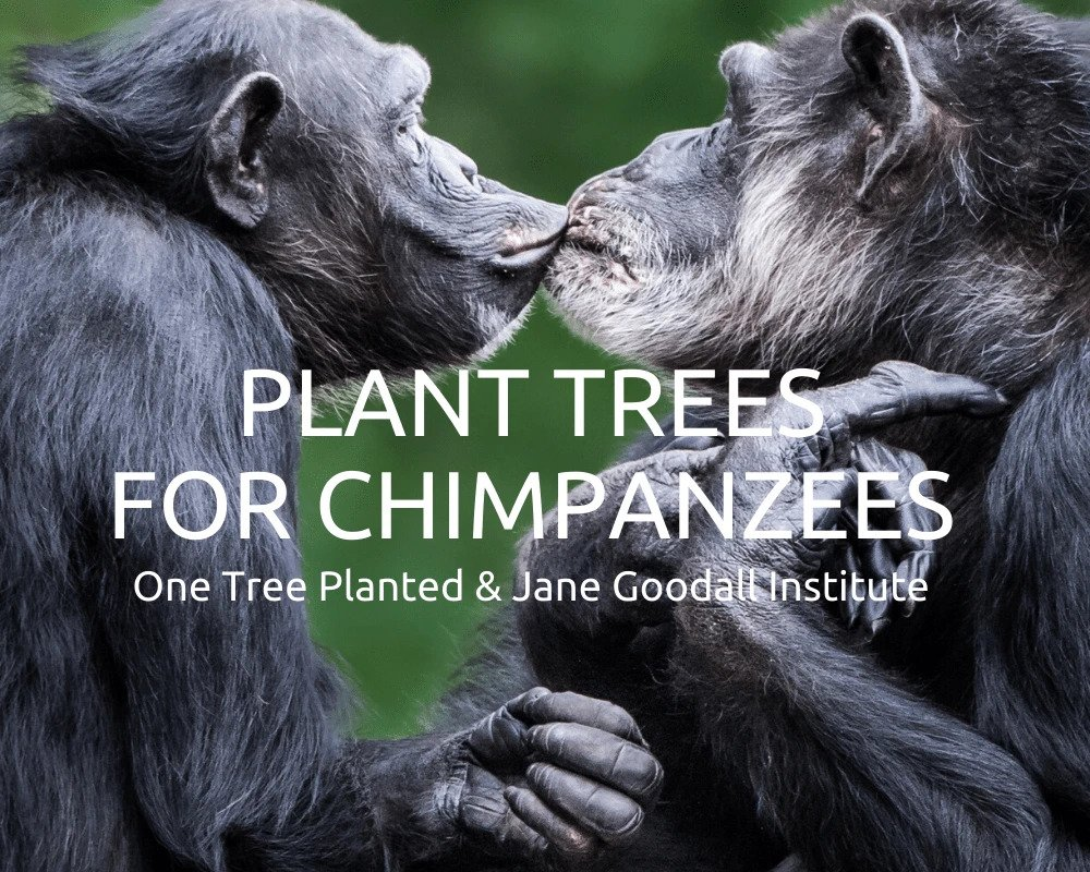 Plant Trees for the Chimpanzees